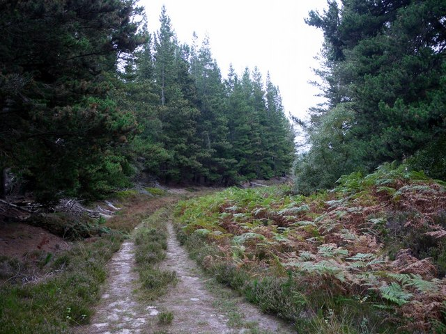 Forest track, West Wood
