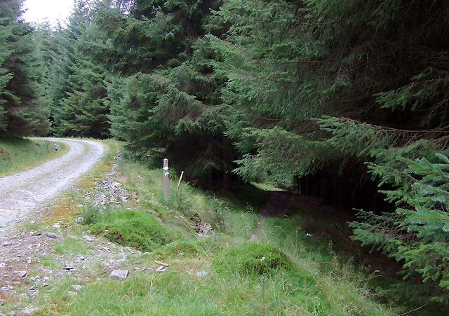 Forest road and bridleway, Cefn Ty'n-y-graig, Powys