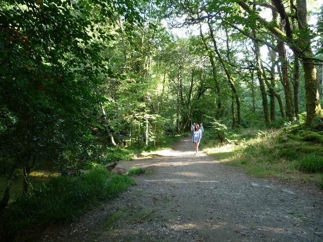 Exmoor : Riverside Path & Tarr Steps Woods