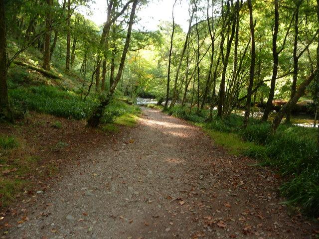 Exmoor : Tarr Steps Woods Riverside Path