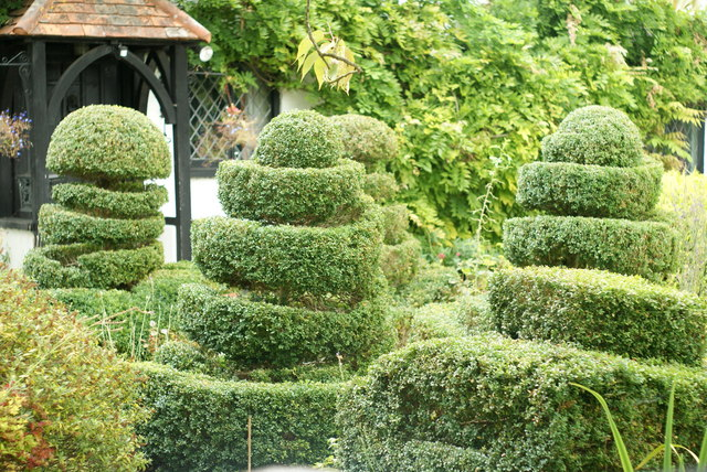 Topiary at The Old Cottage, West Horsley, Surrey