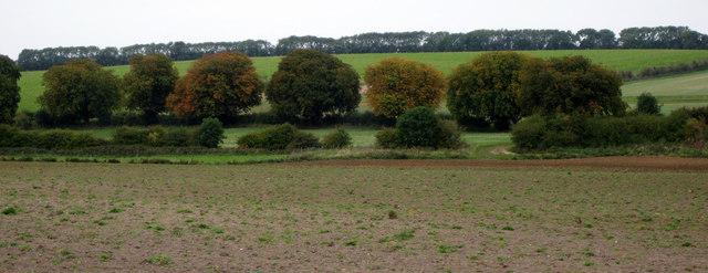 Trees near Stainton-le-Vale
