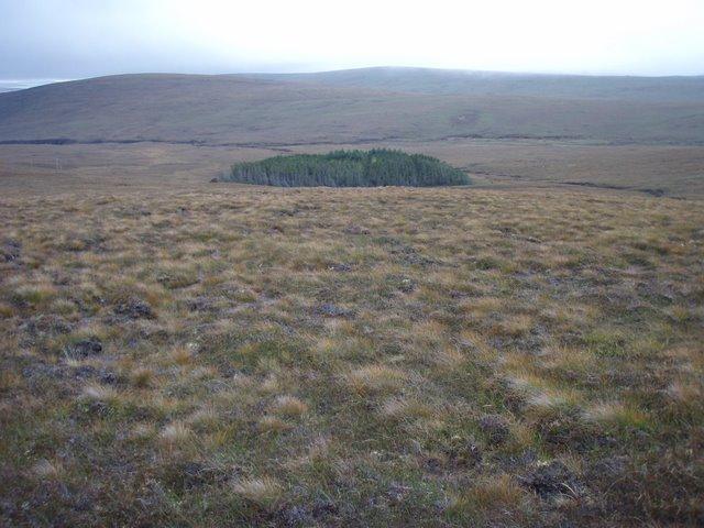 Forestry below Lyrawa Hill