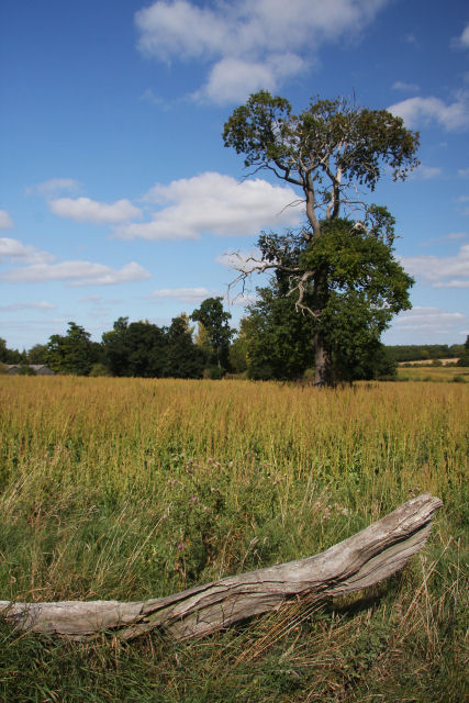 Field behind Lodge Farm