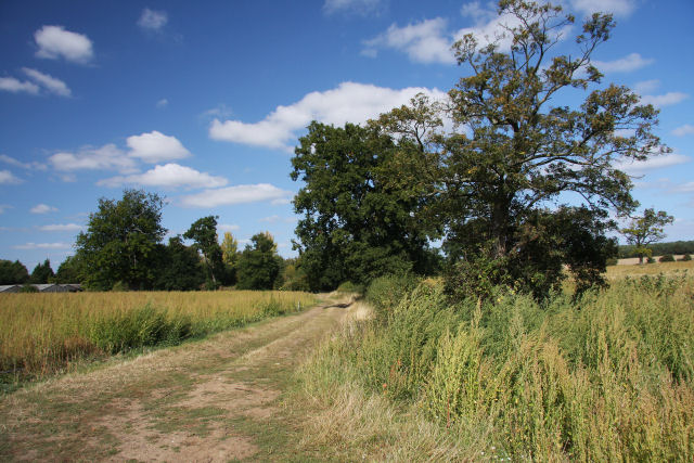 Farm track at Little Saxham