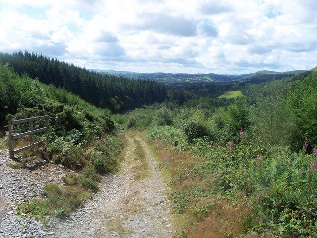 Footpath in Cwm-y-Rhaiadr forest