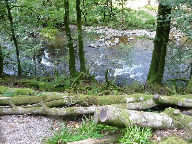 Exmoor : The River Barle & River Bank Tree Branches