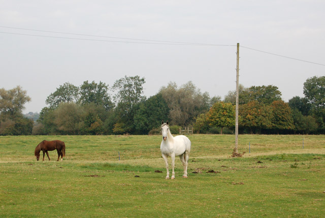 Horses on Napton Road Farm