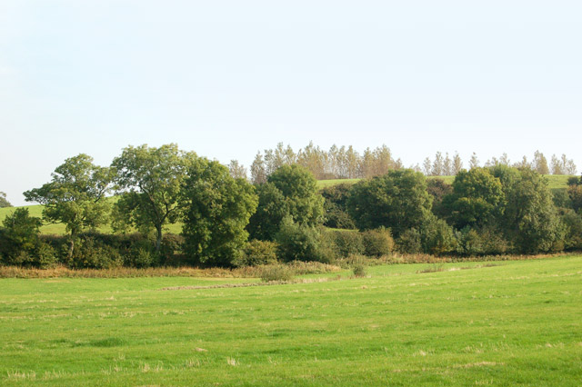 A small spinney west of Napton