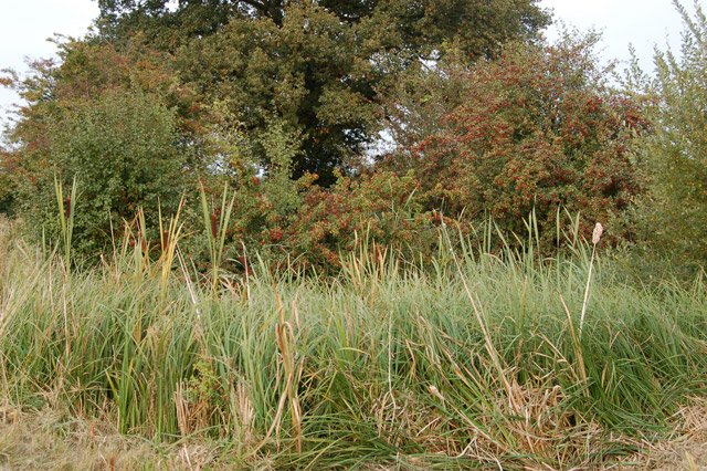 Overgrown pond beside the bridleway to Southam Holt