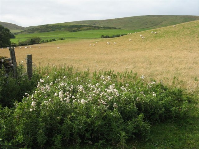 Pasture in the Pentlands at Nine Mile Burn