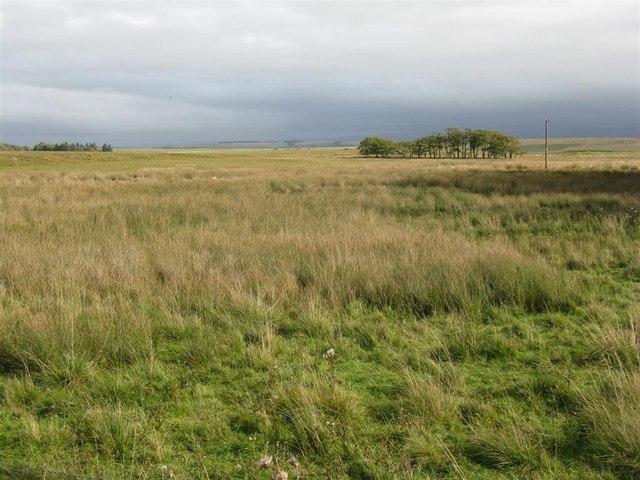 Walstone Moss and Muir