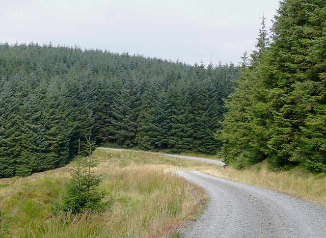 Forestry road on Moel Prysgau, Ceredigion