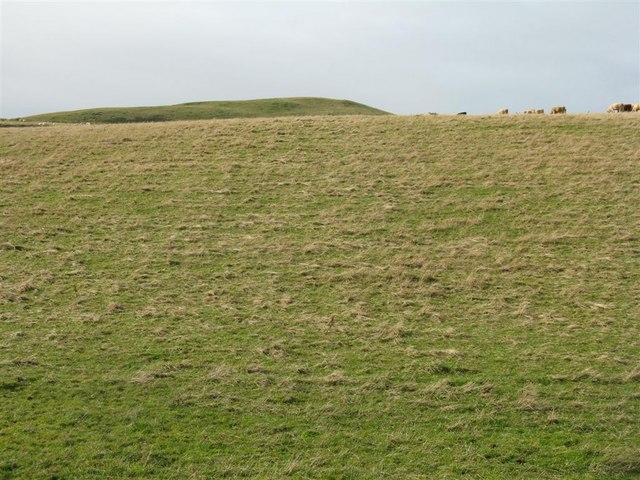 Pasture near Quarrel Haugh