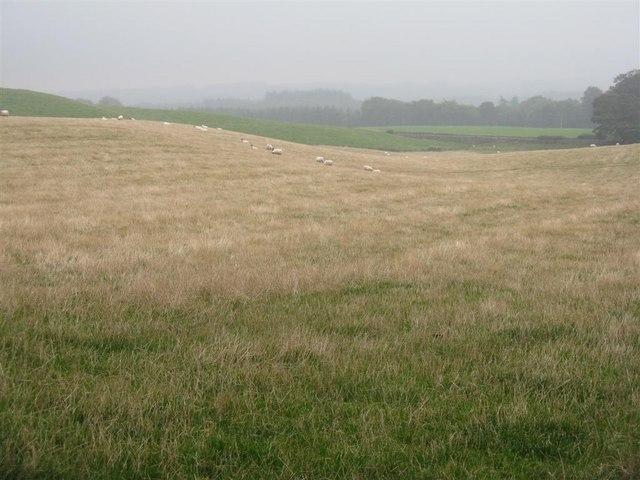 Misty fields near Carsewell