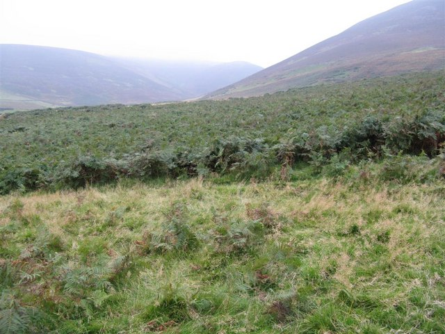 Bracken in the Pentlands