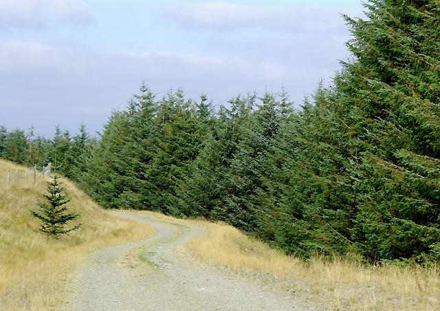 Forestry road on Esgair Hir, Ceredigion