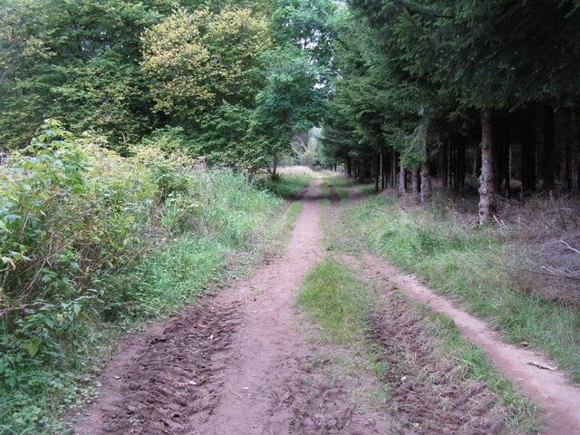Woodland path at Penicuik