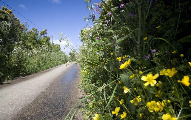 Summer Hedgerows near Chyenhal