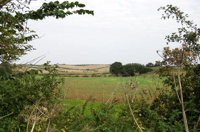 Farmland from footpath