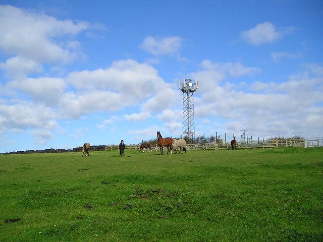 Mast with horses