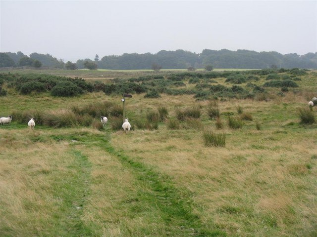 Rough grazing near Silverburn