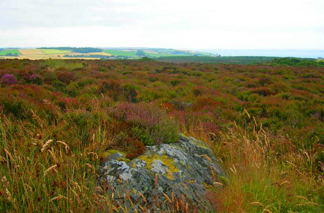 Moorland along the broad peak of Kempstone Hill