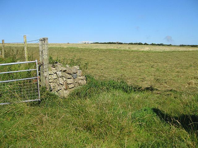 Haymaking near Rhosycaerau