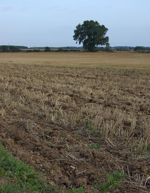 Fields near Cobble Hall, Catwick