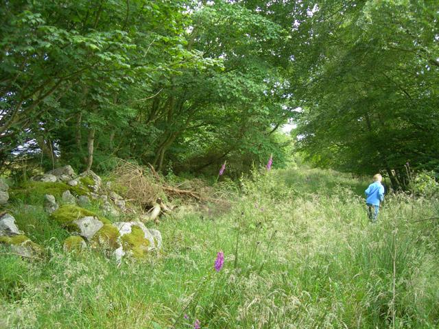 Overgrown track near Aquhorthies