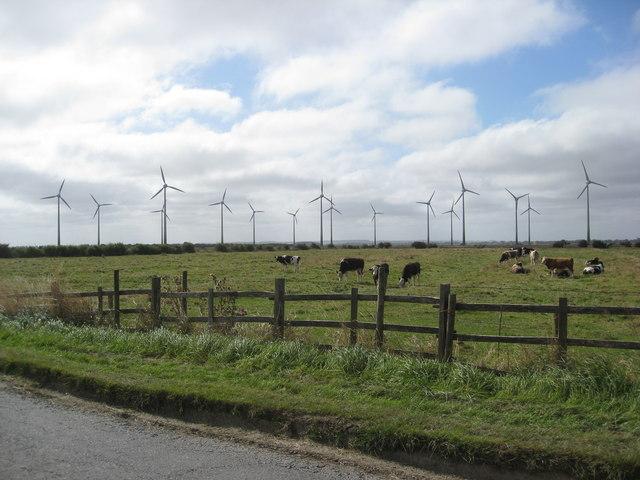Mile Lane -  Grazing near Poplar Farm