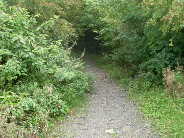 Path through forest in Cathkin Braes Country Park