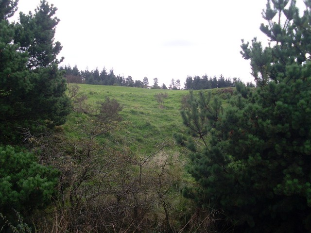 Forestry by the B759