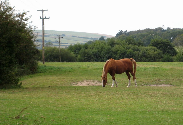 Equine perfection