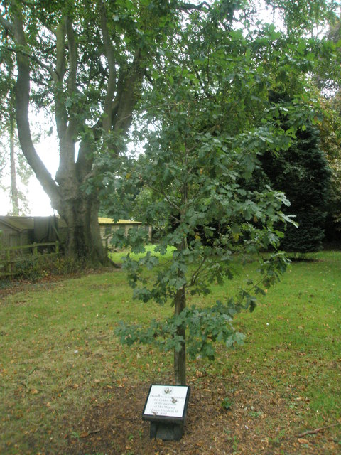 The 2002 Golden Jubilee Oak at West Tisted