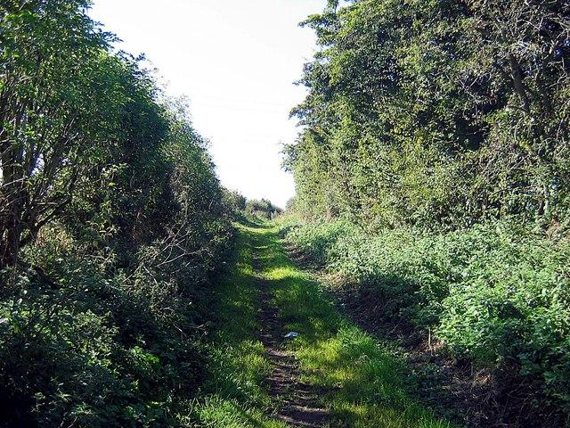 Bushy Lane