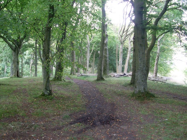 Woodland path, Cathkin Braes