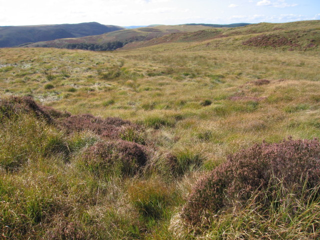 Heather and tussock