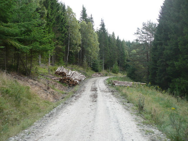 Logs stacked on forestry track