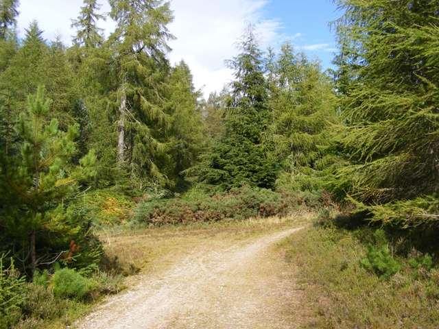 Forest tracks junction