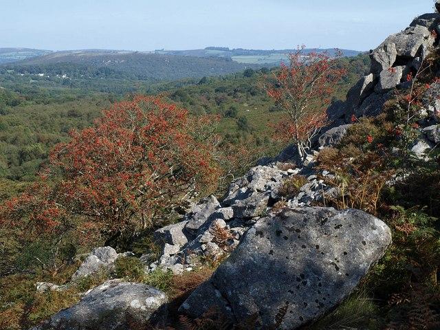 Rowan trees, Holwell Quarry