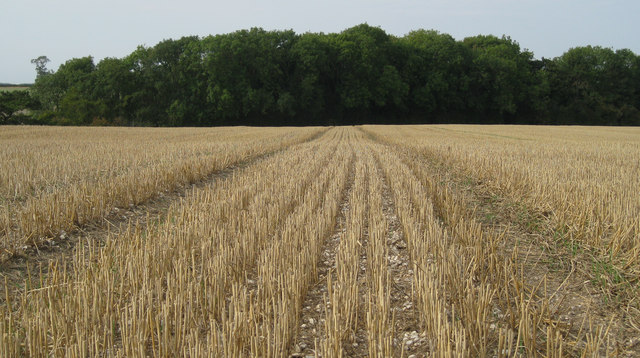 Stubble field and plantation