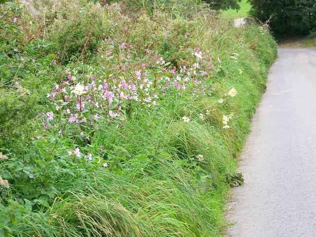 Balsam and Meadowsweet, Ditcheat