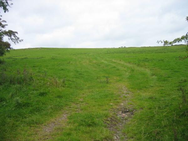 Field near Eglingham Moor