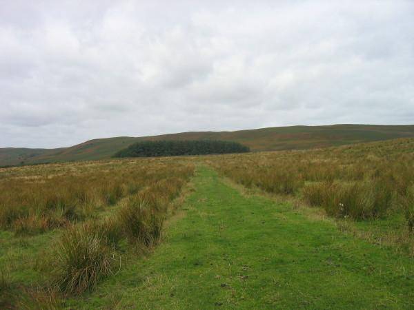 Bridleway on Eglingham Moor