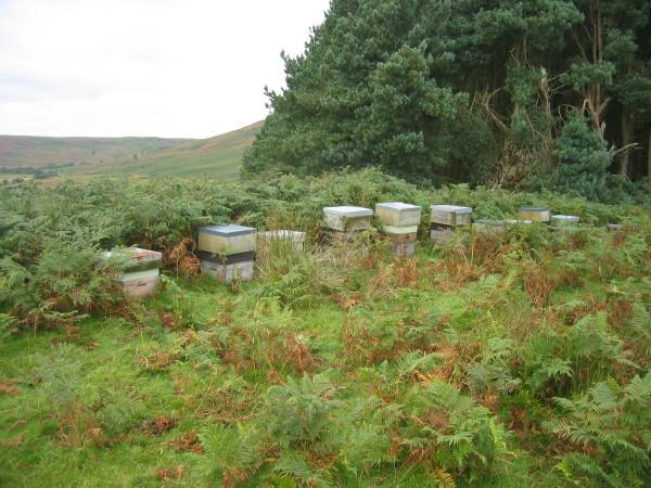 Beehives near Harehope Farm