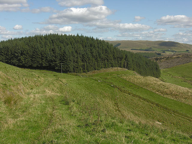 Forestry on Lan Lwyd