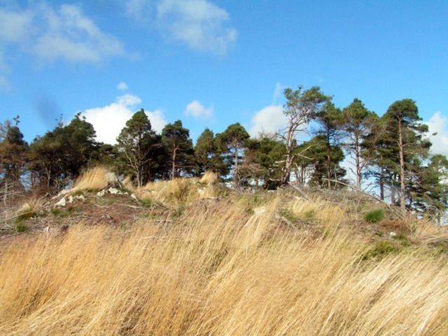 Hilltop Pines