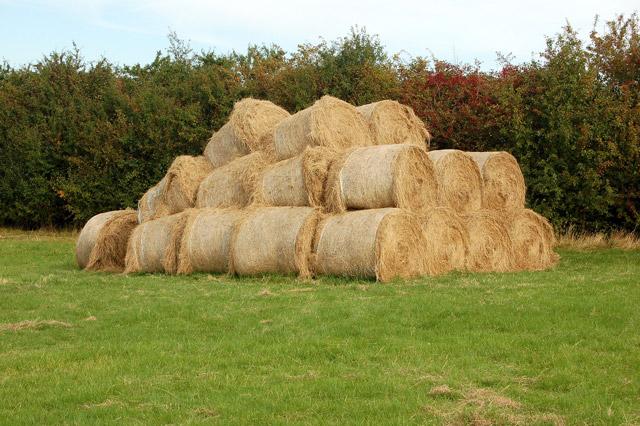 Collapsed stack of bales near Potash Farm