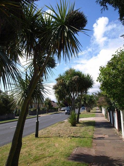 Shiphay Avenue, Torquay